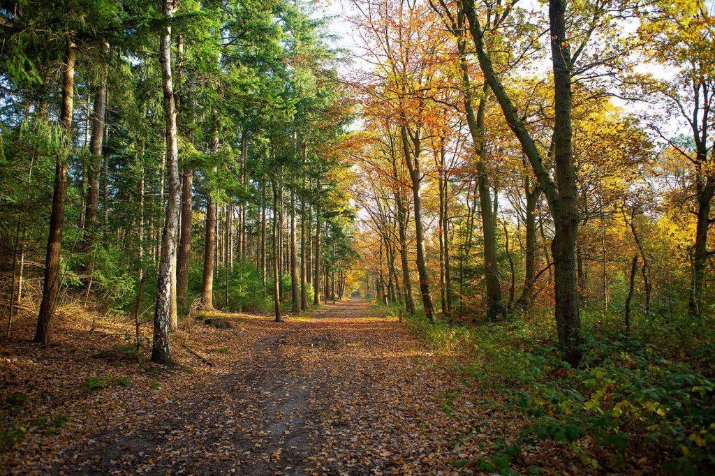 Vught Heide en bossen